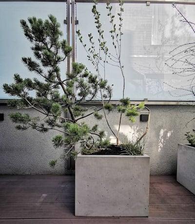 sodo botanika vidus
